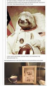 17 Best images about Sloths on Pinterest | The internet ...
