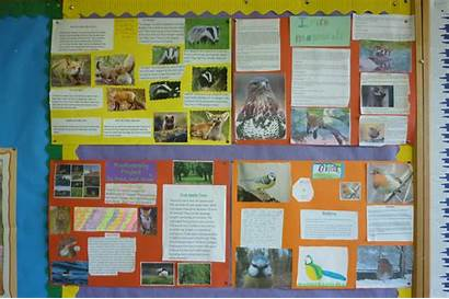 Projects Biodiversity Class 3rd Ransboro National