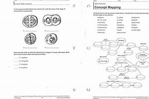 Holt Biology Cell Growth And Division Worksheet Answers