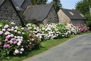 Wann Hortensien Pflanzen : endless summer hortensie hortensie endless summer ~ Lizthompson.info Haus und Dekorationen