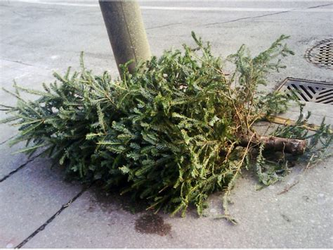livingston holiday garbage recycling christmas tree
