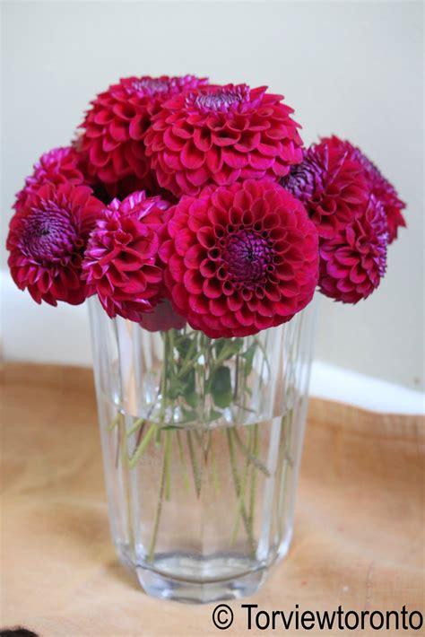 create  mom dahlia flowers  decorate