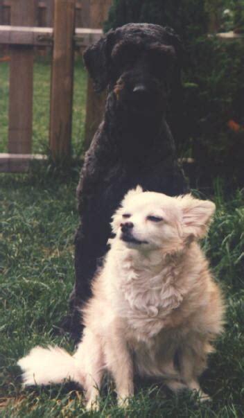 hundebekleidung für chihuahua boozers homepage