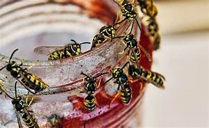 Bienen Und Wespen : hitze im august der sommer der wespen welt tagesspiegel ~ Whattoseeinmadrid.com Haus und Dekorationen