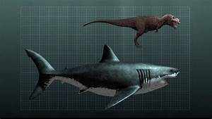 Chronicles of a Chemist • sixpenceee: PREHISTORIC SHARK ...