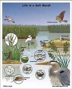 26 Best Marsh Bird Infographic Images On Pinterest