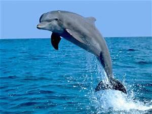 Schöne Delfin Bilder : wir ber uns arbeitnehmer steuerhilfe delphin e v ~ Frokenaadalensverden.com Haus und Dekorationen