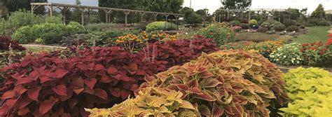 JC Raulston Arboretum Summer 2018 Color Trials Report