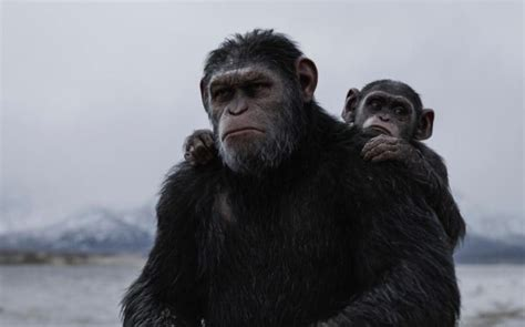 war   planet   apes review  soulful