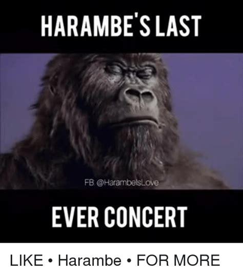 Dank Harambe Memes - dank memes meme harambetslast fb ever concert like harambe for more sizzle