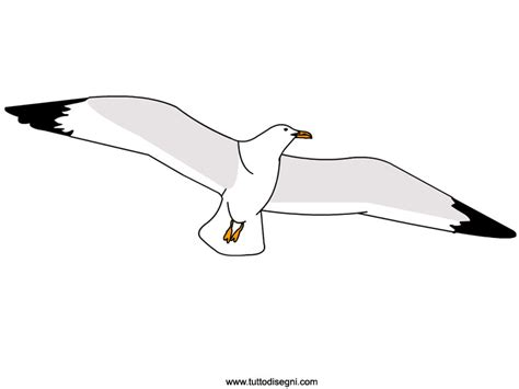 Disegno Gabbiano - gabbiano immagine colorata tuttodisegni