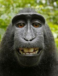 hilarious expressions of animals animals zone