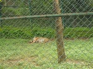 Tiger Safari - Picture of Sanjay Gandhi National Park ...