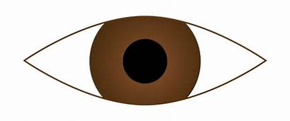 Eyes Brown Clip Clipart Eye Eyeball Cartoon