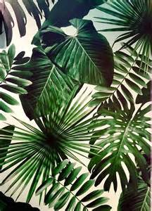 Best Plant For Dark Bathroom by 25 Best Ideas About Tropical Wallpaper On Pinterest