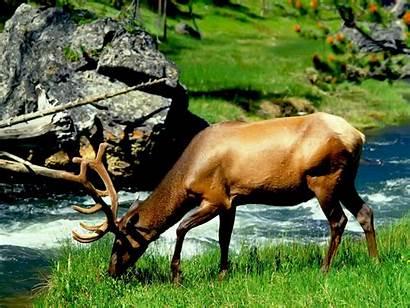 Wild Animals Animal Any Nature Wildlife Natural
