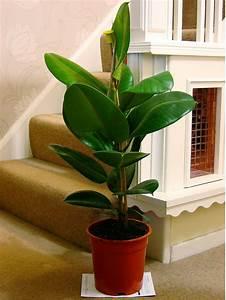 Lifeimprover - TRADITIONAL EVERGREEN INDOOR PLANT GARDEN ...