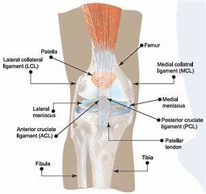 Diagram Of Torn Acl : torn acl knee injury symptoms causes treatment prevention ~ A.2002-acura-tl-radio.info Haus und Dekorationen