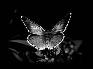 Black Butterfly Wallpapers - Wallpaper Cave