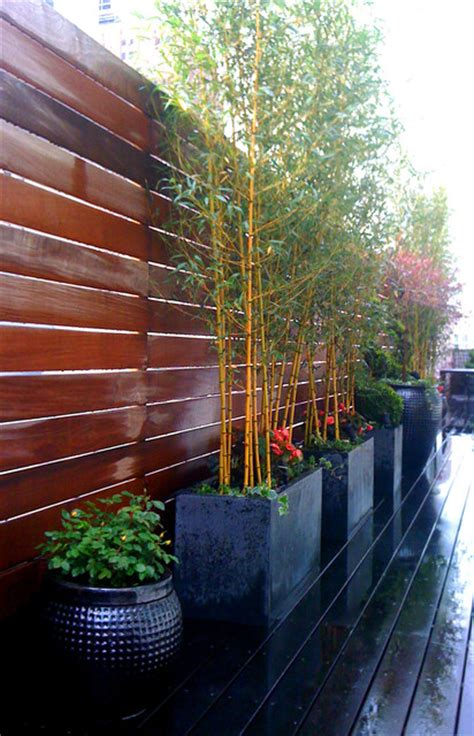 bamboo plants nyc manhattan roof garden deck bamboo fence container garden terrace planters contemporary