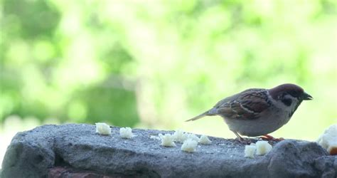 two sparrows competing on stealing bread crumbs from table