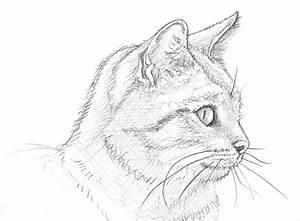 Zeichnen Lernen Mit Bleistift : ein katzenportr t zeichnen lernen ~ Frokenaadalensverden.com Haus und Dekorationen