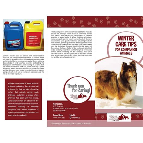 winter care tips animal welfare nonprofit national