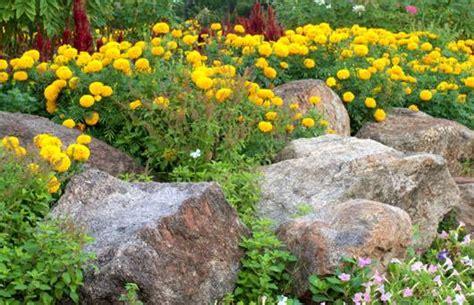 how to design a rock garden mnn nature network