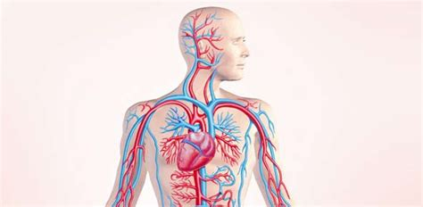 Top Circulatory System Quizzes, Trivia, Questions