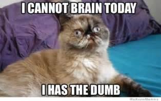 dumb cat do not dumb here