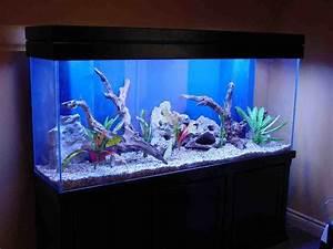 Deco Aquarium Zen : cuisine s duisante deco aquarium deco aquarium jardiland ~ Melissatoandfro.com Idées de Décoration