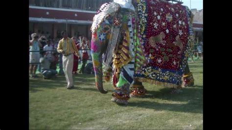 elephant festival jaipur india  youtube