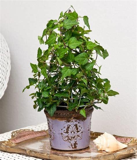 Easiest Houseplants   Grow  Care Balcony