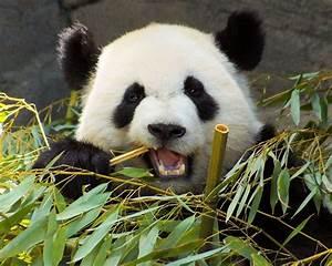 Don't market your business like a Panda Bear!!