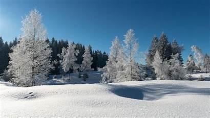Frost Winter Forest Trees Snow Desktop Wallpapers