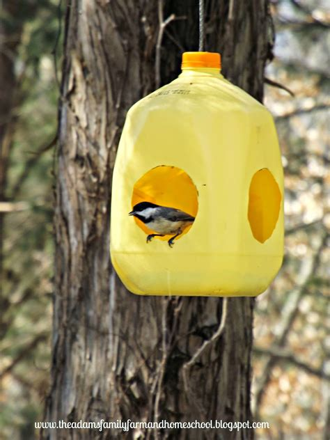 adams family farm and homeschool milk jug bird feeder photos
