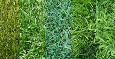 types of lawns the blog at jacks small engines