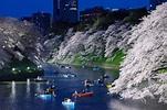 夜櫻、划船、屋台小吃,來千鳥之淵一帶感受東京人氣賞櫻景點的魅力! | 東京、賞櫻、千鳥之淵、千代田區 ...