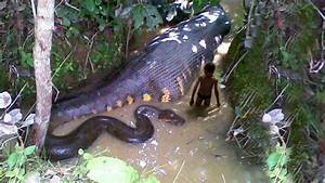The biggest snake in the world