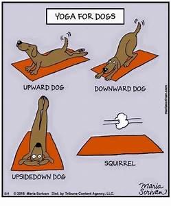 YOGA FOR DOGS UPWARD DOG DOWNWARD DOG O O SQUIRREL ...