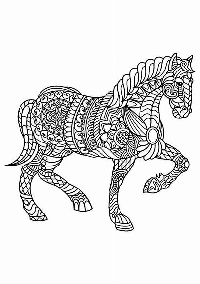 Coloring Horse Horses Children Pages Trotting Animals