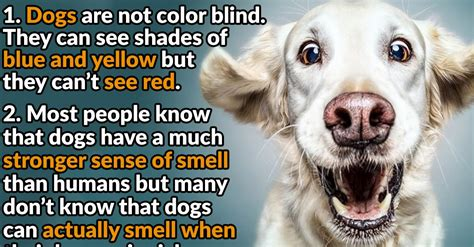 how are dogs 44 pawesome facts about dogs