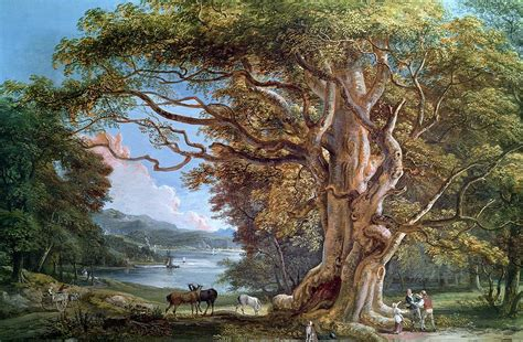 an ancient beech tree painting by paul sandby