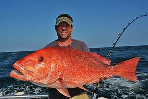 big-red-snapper-orange-beach (2) - Distraction Charters