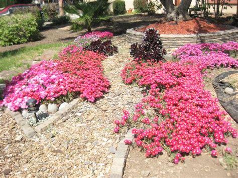 xeriscape bushes fabulous xeriscape ideas for your yard