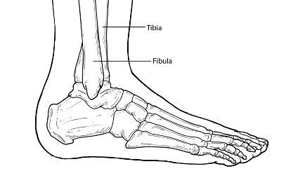 emergence anime pdf ankle fracture scottsdale podiatrist dr david richer