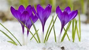 Garten Im März : garten im m rz ~ Lizthompson.info Haus und Dekorationen