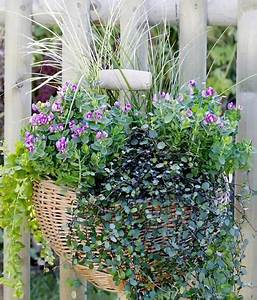 Hängepflanzen Für Balkonkästen : balkonkasten mit kreuzblume segge und pfennigkraut ~ Michelbontemps.com Haus und Dekorationen