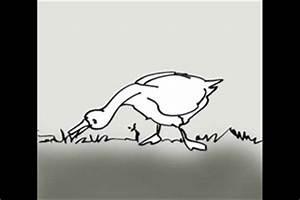 Gans Braten Im Backofen : video ente oder gans unterschied leicht erkl rt ~ Lizthompson.info Haus und Dekorationen
