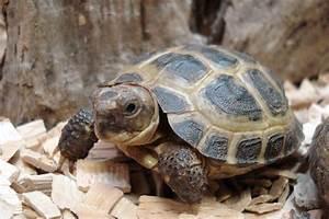 Acheter De La Terre : o trouver une tortue de terre en magasin o trouver ~ Dailycaller-alerts.com Idées de Décoration
